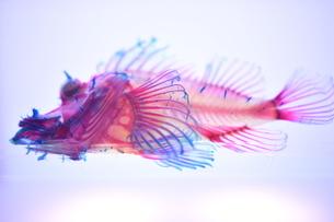 透明標本の写真素材 [FYI03399950]