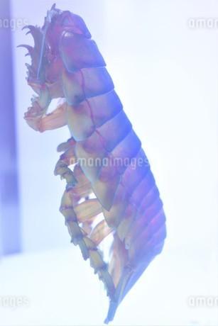 透明標本の写真素材 [FYI03399953]