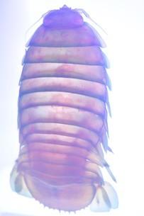 透明標本の写真素材 [FYI03399954]