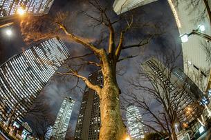 新宿にそびえ立つ木のイメージの写真素材 [FYI03399995]