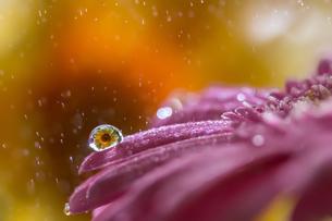 花としずくの写真素材 [FYI03400089]
