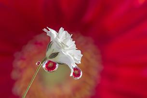 花としずくの写真素材 [FYI03400090]