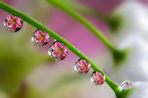 花としずくの写真素材 [FYI03400092]