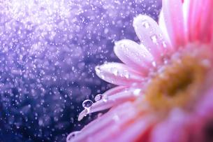 花としずくの写真素材 [FYI03400095]