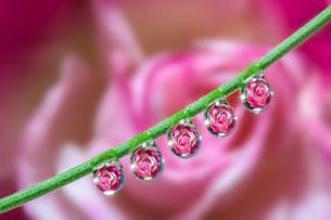 花としずくの写真素材 [FYI03400109]