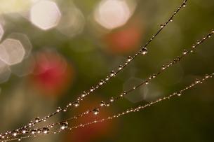 雨のしずくの写真素材 [FYI03400134]
