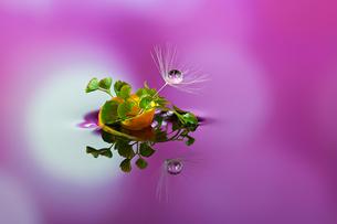 水に浮かぶ花としずくの写真素材 [FYI03400142]