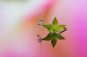 花としずくの写真素材 [FYI03400143]