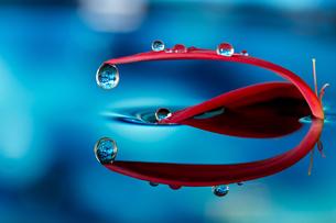 水に浮かぶ花としずくの写真素材 [FYI03400147]