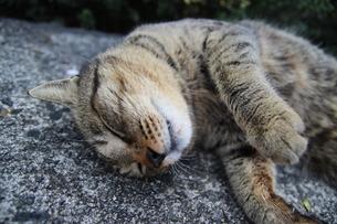 猫の写真素材 [FYI03400478]