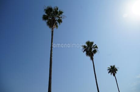 南国の青空の写真素材 [FYI03400766]