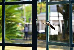 窓から見える晴れた日の庭の緑の写真素材 [FYI03400830]