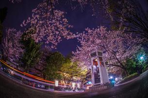 満開の夜桜と横浜元町の電話ボックスの写真素材 [FYI03401023]