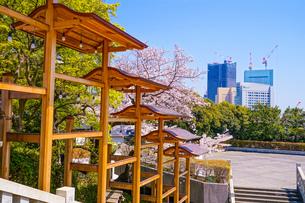 神社の飾りと桜の写真素材 [FYI03401043]