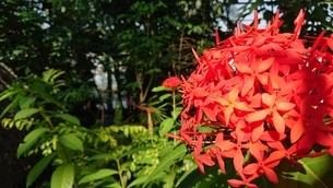 熱帯植物の写真素材 [FYI03401083]