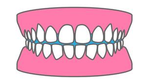 健康な歯、歯並びのイラスト素材のイラスト素材 [FYI03401085]