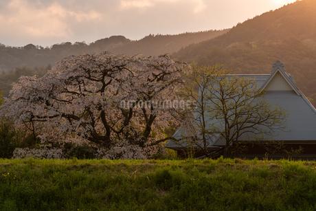 宝珠寺の枝垂れ桜 日本 佐賀県 神埼市の写真素材 [FYI03401548]
