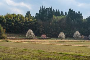 里山の春 日本 大分県 玖珠郡 九重町 松木の写真素材 [FYI03401551]