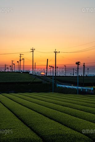 茶畑と夕陽 日本 鹿児島県 霧島市 溝辺町麓の写真素材 [FYI03401561]