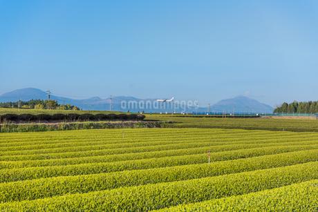 茶畑と霧島連峰の写真素材 [FYI03401563]