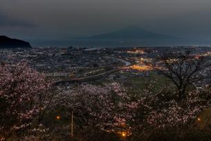 高岡公園から桜と姶良市の夜景と桜島 日本 鹿児島県 姶良市の写真素材 [FYI03401570]