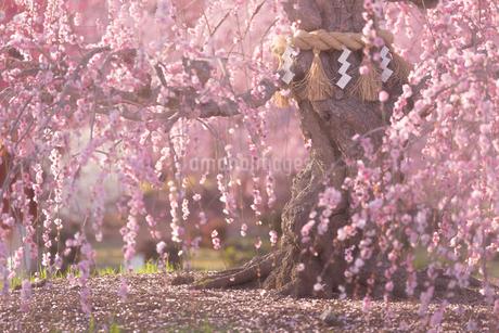 鈴鹿の森庭園 日本 三重県 鈴鹿市の写真素材 [FYI03401595]