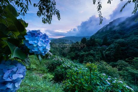 東雲の里 日本 鹿児島県 出水市の写真素材 [FYI03401604]