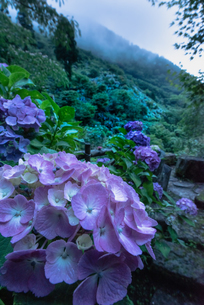 東雲の里 日本 鹿児島県 出水市の写真素材 [FYI03401605]
