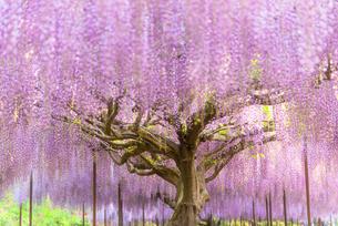 白毫寺 日本 兵庫県 丹波市の写真素材 [FYI03401629]