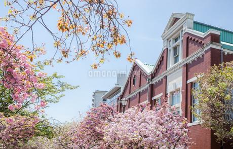 造幣博物館と桜の通り抜けの写真素材 [FYI03401634]