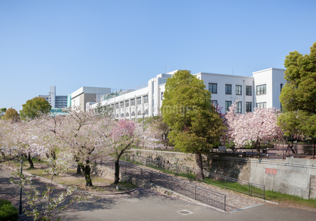 大阪造幣局本局と満開の桜の写真素材 [FYI03401638]