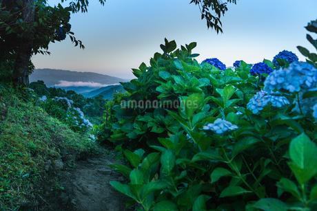 東雲の里 日本 鹿児島県 出水市の写真素材 [FYI03401658]