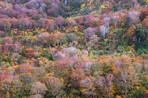 鳥海山 祓川 日本 秋田県 由利本荘市の写真素材 [FYI03401683]