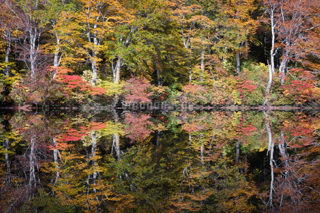 鳥海山 日本 山形県 遊佐町の写真素材 [FYI03401690]