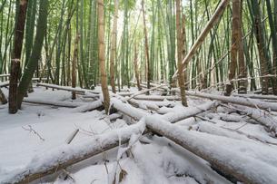 元滝伏流水 日本 秋田県 にかほ市の写真素材 [FYI03401727]