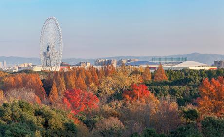万博記念公園から臨む紅葉と吹田市の眺望の写真素材 [FYI03402076]