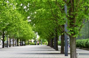 歩道の緑の写真素材 [FYI03402126]