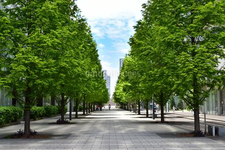 並木道の歩道の写真素材 [FYI03402127]