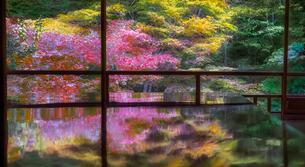 瑠璃光院の書院から見た紅葉の写真素材 [FYI03402189]