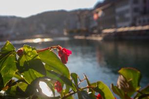 スイス、ルツェルン、お花の風景の写真素材 [FYI03402273]