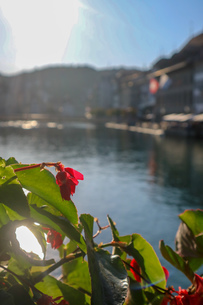スイス、ルツェルン、お花の風景の写真素材 [FYI03402275]