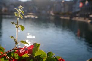 スイス、ルツェルン、お花の風景の写真素材 [FYI03402277]
