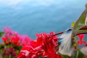 スイス、ルツェルン、お花の風景の写真素材 [FYI03402281]