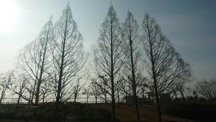大樹の写真素材 [FYI03402359]