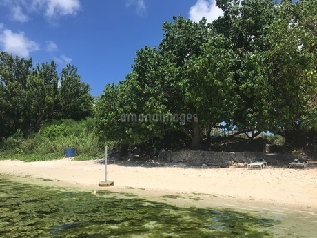 木陰と砂浜の写真素材 [FYI03402470]