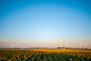 房総半島キャベツ畑と風車の写真素材 [FYI03402545]