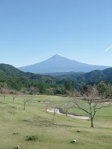 富士山とグリーンの写真素材 [FYI03402583]