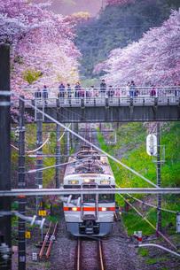 春の山北駅(神奈川県足柄上郡)の写真素材 [FYI03402610]