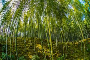 京都・嵐山の竹林の写真素材 [FYI03402611]