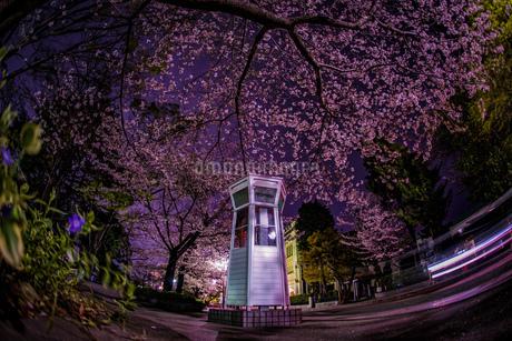 満開の夜桜と横浜元町の電話ボックスの写真素材 [FYI03402767]